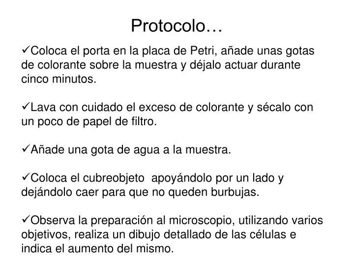Protocolo…