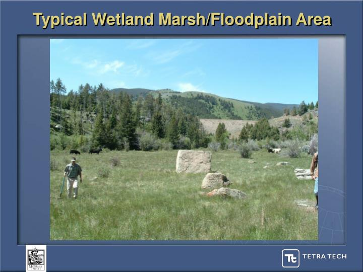 Typical Wetland Marsh/Floodplain Area
