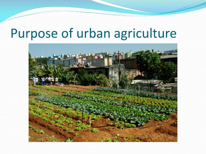 Purpose of urban agriculture