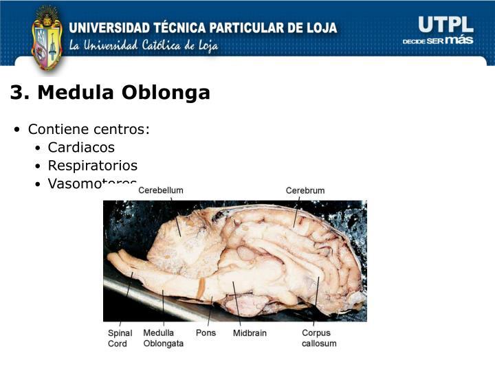 3. Medula Oblonga