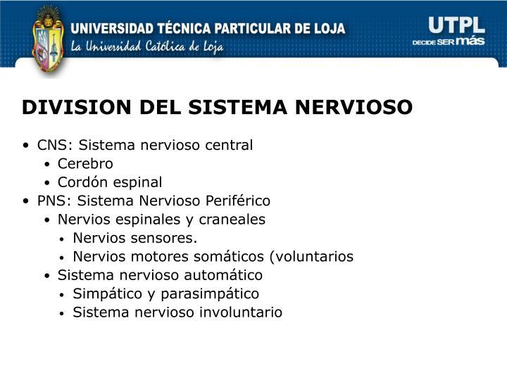 DIVISION DEL SISTEMA NERVIOSO