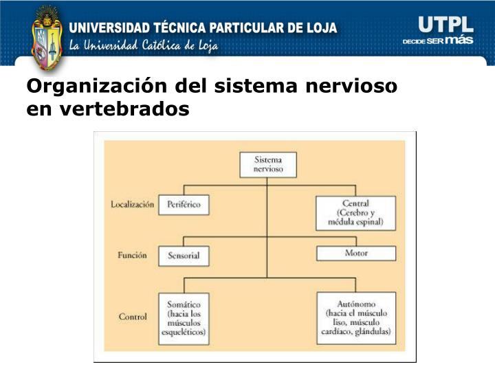 Organización del sistema nervioso en vertebrados