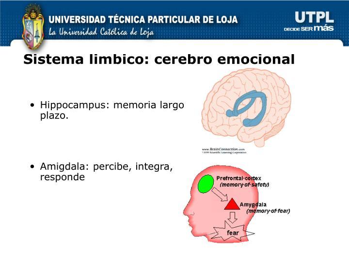 Sistema limbico: cerebro emocional