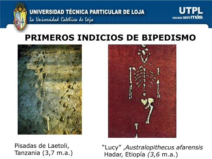 PRIMEROS INDICIOS DE BIPEDISMO