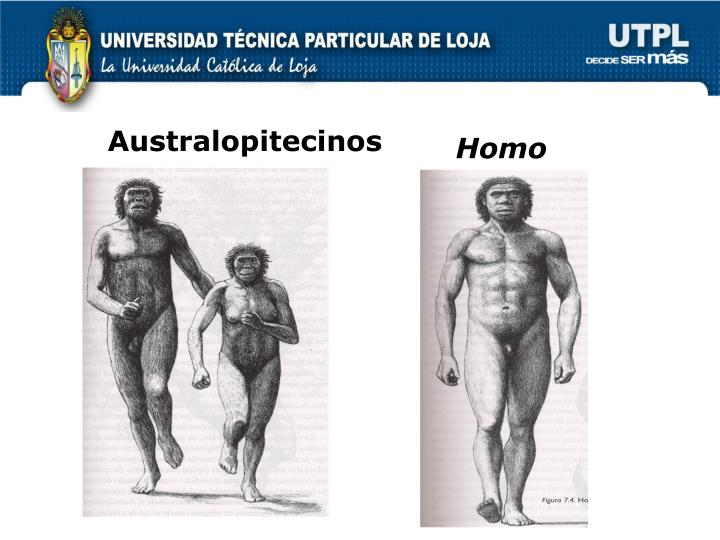 Australopitecinos