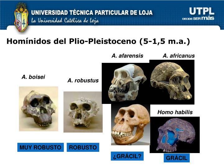 Homínidos del Plio-Pleistoceno (5-1,5 m.a.)