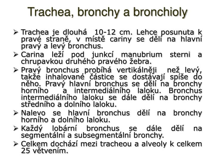 Trachea bronchy a bronchioly