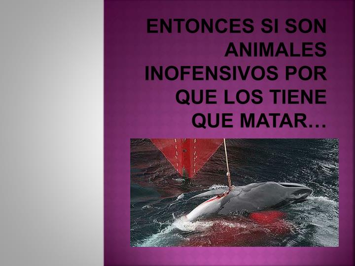 Entonces si son animales inofensivos por que los tiene que matar…