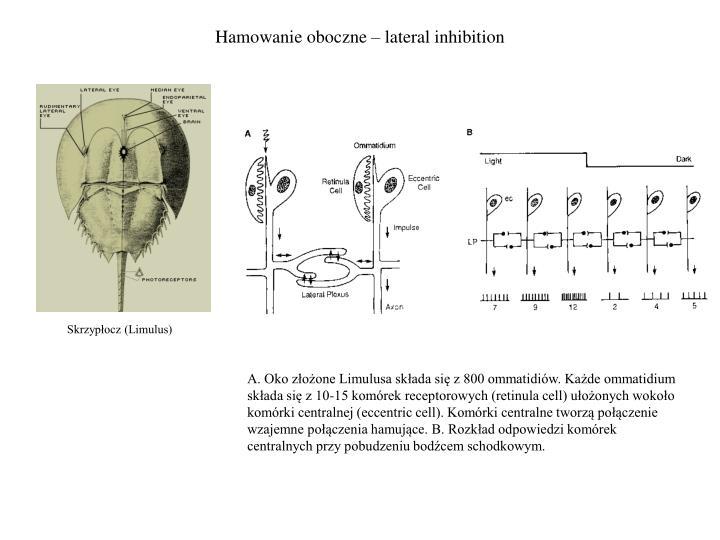 Hamowanie oboczne – lateral inhibition