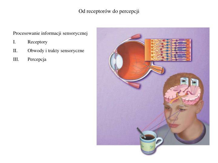 Od receptorów do percepcji