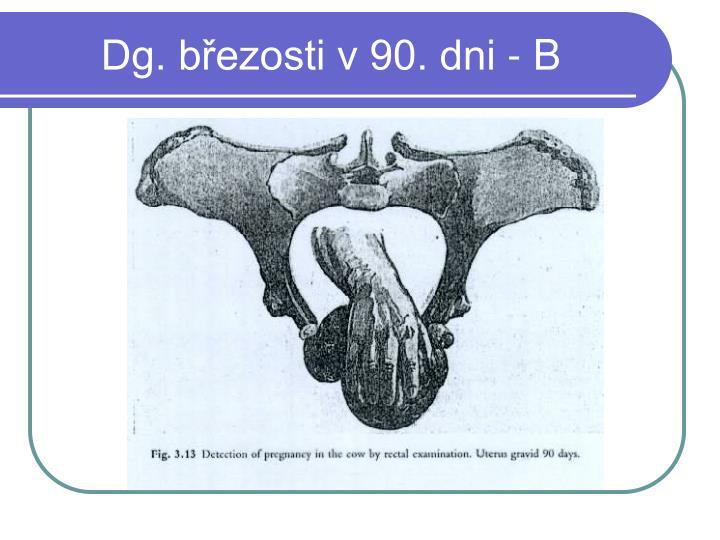 Dg. březosti v 90. dni - B