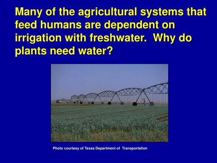 Many of the agricultural systems that feed humans are dependent on irrigation with freshwater.  Why do plants need water?