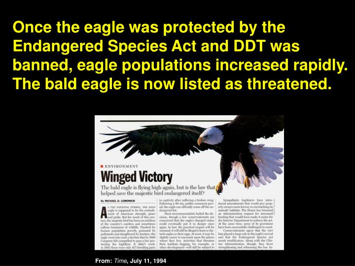 Once the eagle was protected by the Endangered Species Act and DDT was banned, eagle populations increased rapidly.  The bald eagle is now listed as threatened.