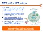 kras and the egfr pathway