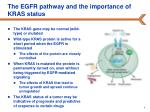 the egfr pathway and the importance of kras status