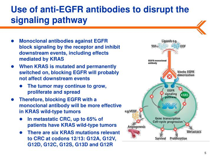 Use of anti-EGFR antibodies to disrupt the signaling pathway