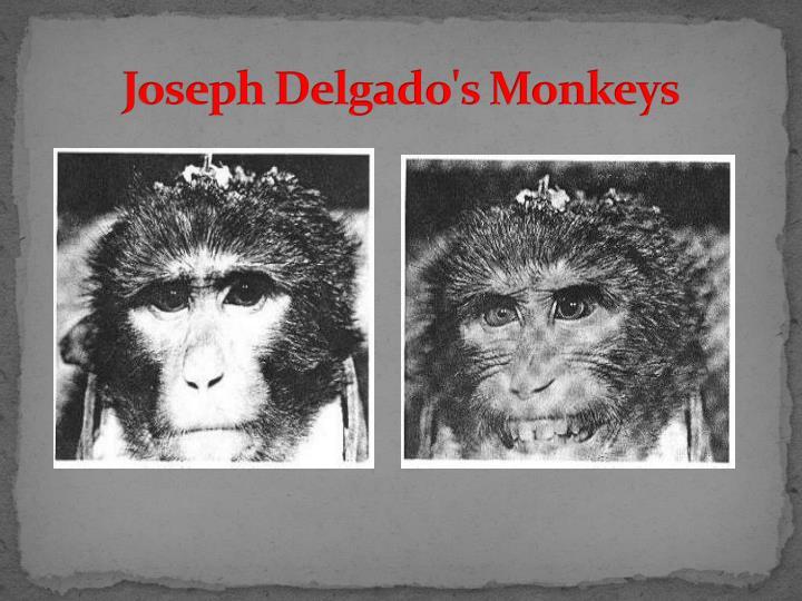Joseph Delgado's Monkeys
