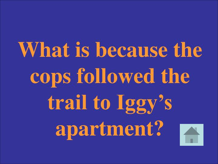 What is because the cops followed the trail to Iggy's apartment?