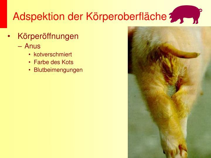 Adspektion der Körperoberfläche