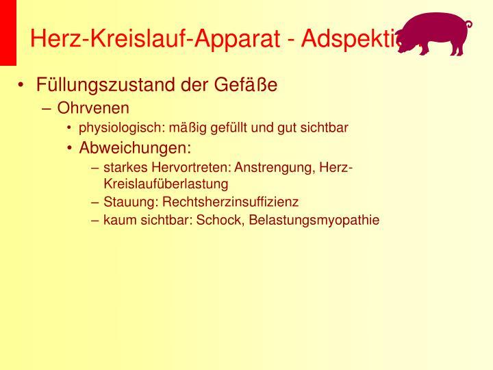 Herz-Kreislauf-Apparat - Adspektion