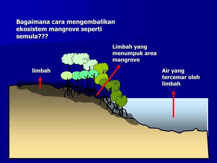 Bagaimana cara mengembalikan ekosistem mangrove seperti semula???