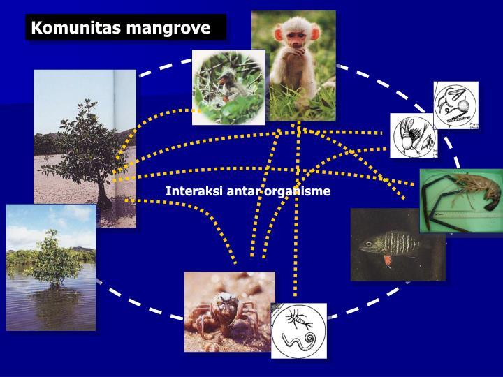 Komunitas mangrove