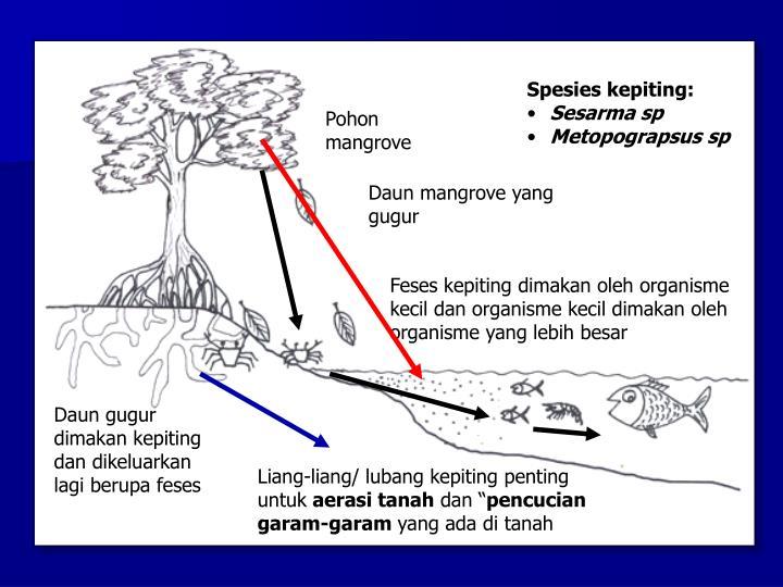 Spesies kepiting: