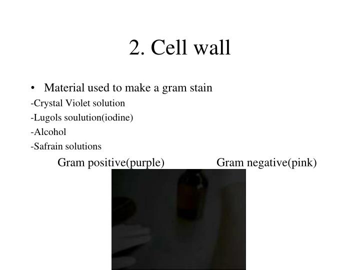 2. Cell wall