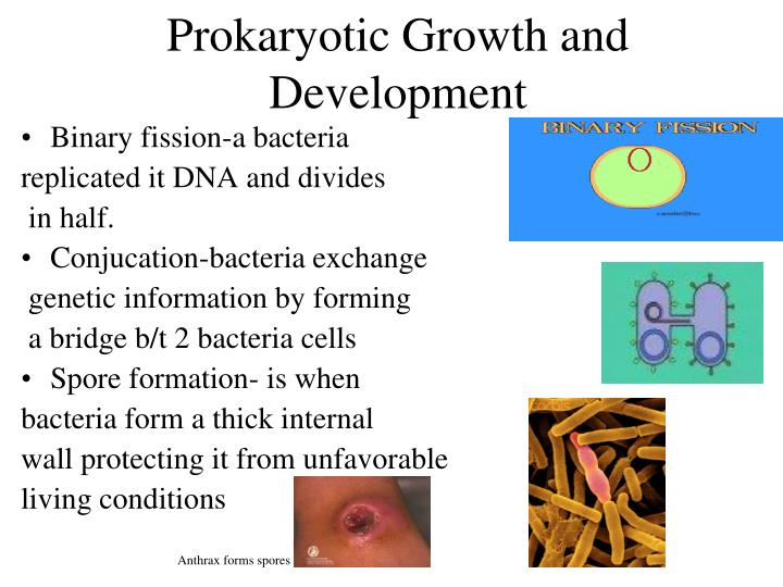 Prokaryotic Growth and Development