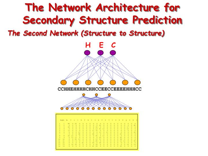 The Network Architecture for Secondary Structure Prediction