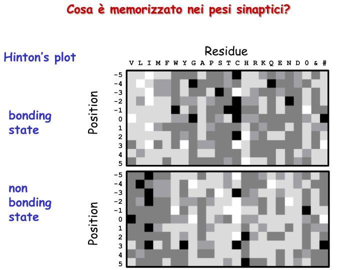 Cosa è memorizzato nei pesi sinaptici?