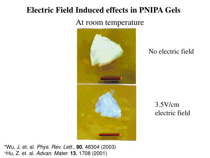 Electric Field Induced effects in PNIPA Gels