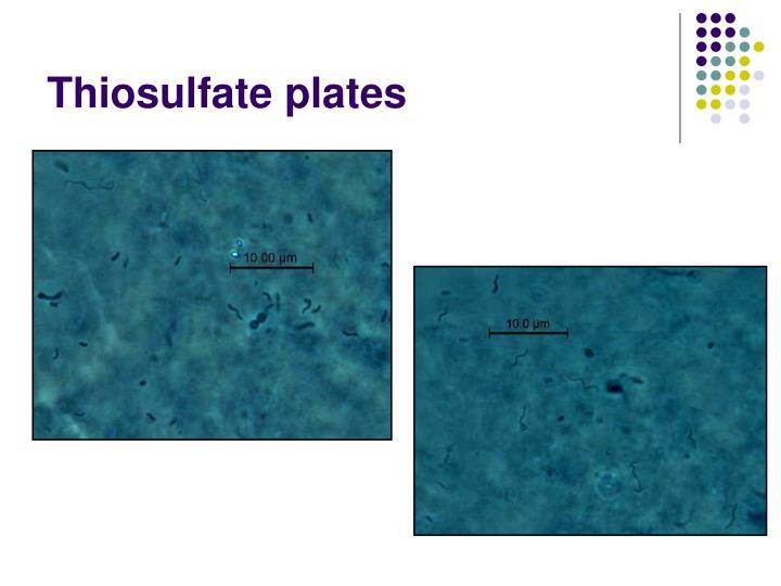 Thiosulfate plates