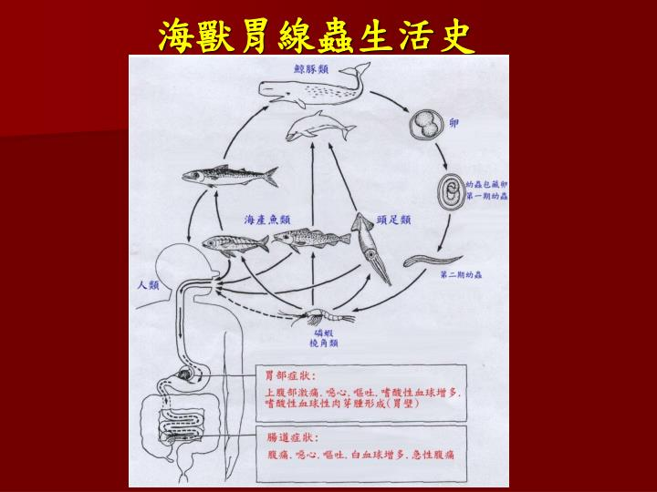 海獸胃線蟲生活史