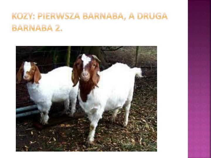 Kozy: pierwsza Barnaba, a druga Barnaba 2.