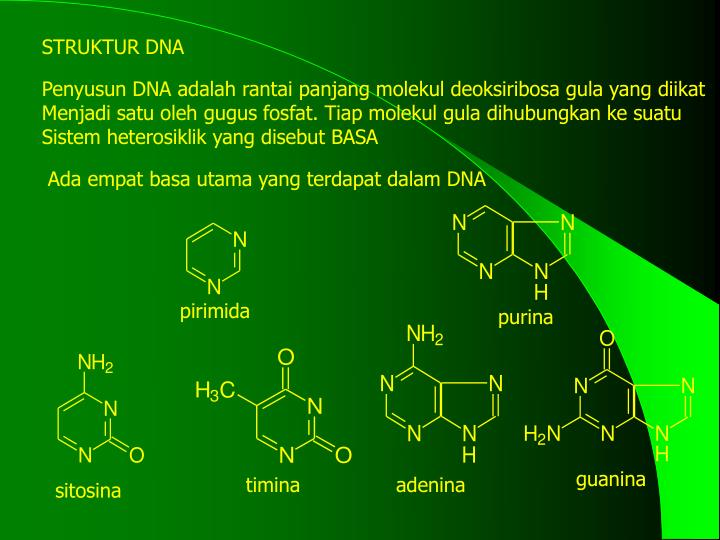 STRUKTUR DNA