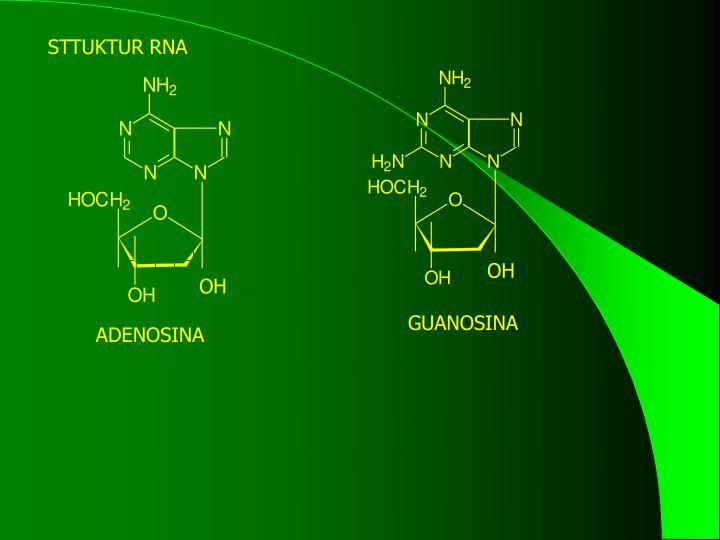 STTUKTUR RNA
