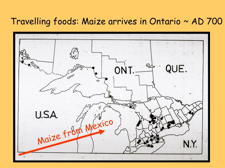 Travelling foods: Maize arrives in Ontario ~ AD 700