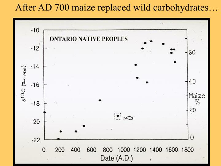 After AD 700 maize replaced wild carbohydrates…