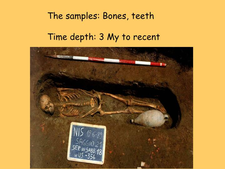 The samples: Bones, teeth