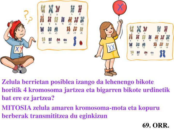 Zelula berrietan posiblea izango da lehenengo bikote horitik 4 kromosoma jartzea eta bigarren bikote urdinetik bat ere ez jartzea?