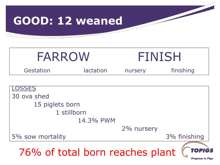 GOOD: 12 weaned