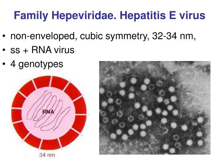 Family Hepeviridae. Hepatitis E virus
