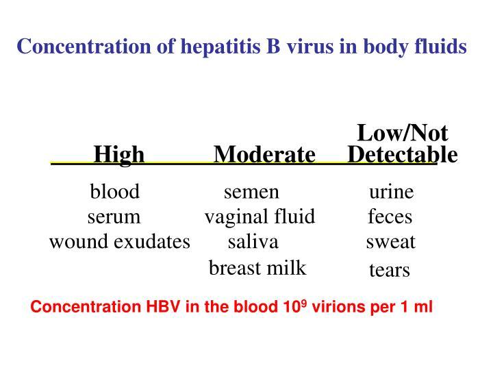 Concentration of hepatitis B virus in body fluids