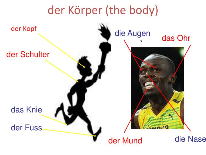 Der k rper the body