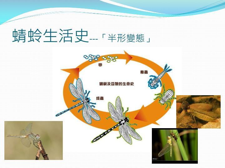 蜻蛉生活史