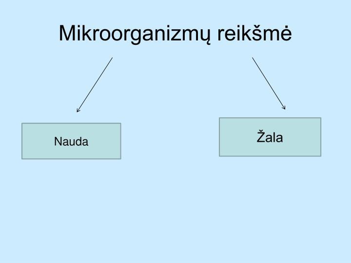 Mikroorganizmų reikšmė