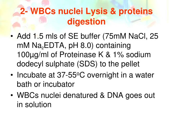 2- WBCs nuclei Lysis & proteins digestion
