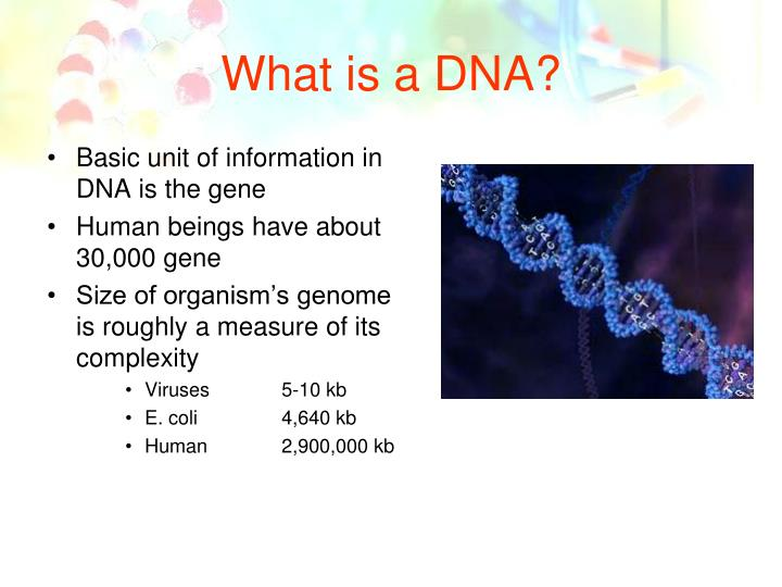 What is a DNA?