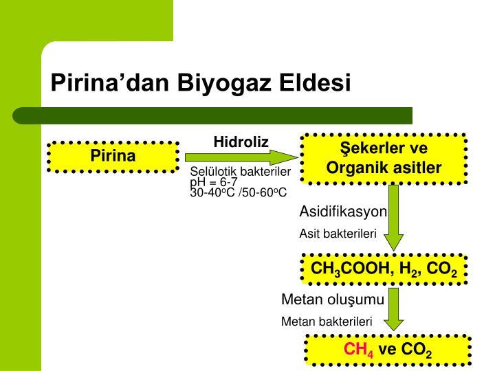 Şekerler ve Organik asitler